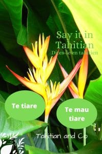 Bird of paradise flower with the text te tiare and te mau tiare. Meaning in Tahitian : the flower, the flowers. Learning tahitian with Tahian and Co