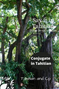 Tahitian trees in a tahitian forest. With title conjugate in Tahitian. To learn to conjugate in Tahitian at Tahitian and Co