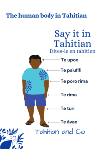 Man with human body part written in Tahitian. Learn human body vocabulary in Tahitian with Tahitian and Co