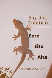 Tahitian gecko on a white background. To learn the negation in Tahitian with the words Eere, Eita, Aita