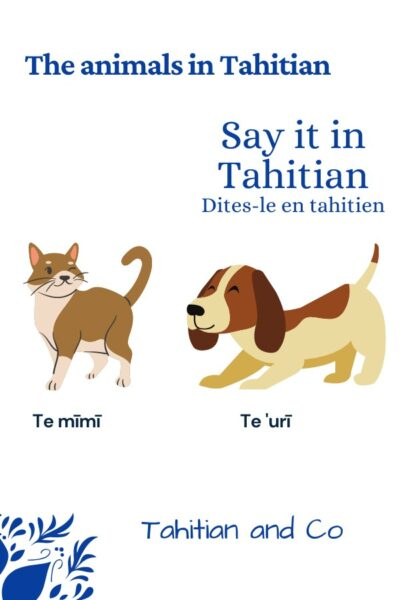 A cat and a dog to learn the animals vocabulary in Tahitian